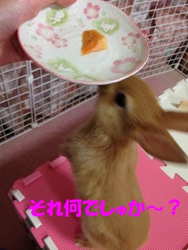 IMG_2531.かき.かき