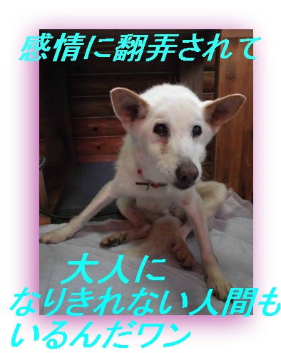 DSCF1142_convert_20110928132105.jpg