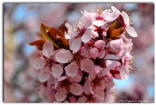 santa+fe+life+2012+002_convert_20120407074459.jpg