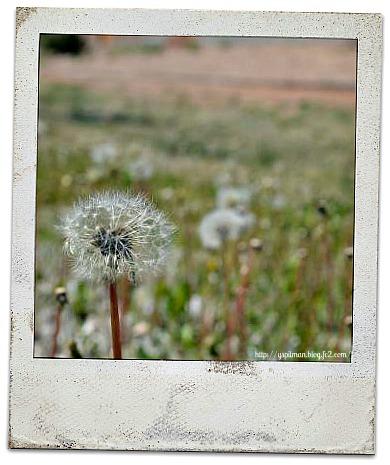 santa+fe+life+2012+011_convert_20120424112725.jpg