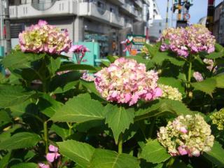 TRIP TO ARAKAWA 5