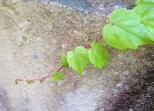 green_20131026231926feb.jpg