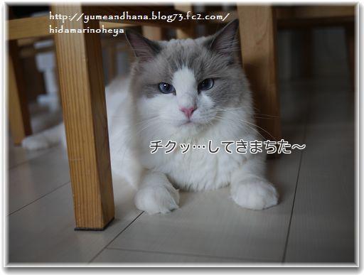 1-Opqxygzf1HpIrd_1359807721_1359807810.jpg
