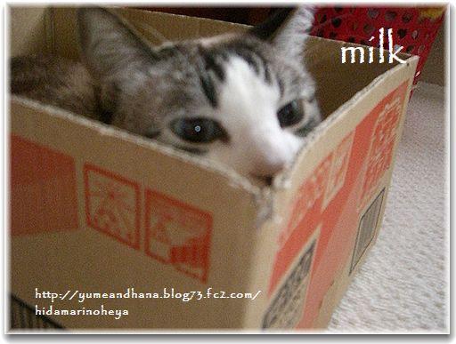 1-1ミルク1302061