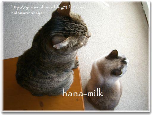 1-ハナミルク130207