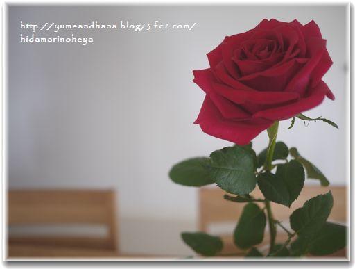 1-バラの花1302181