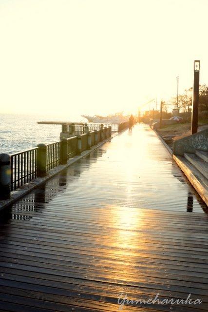 桟橋江の島