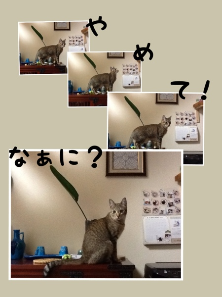 fc2blog_20130117174355210.jpg