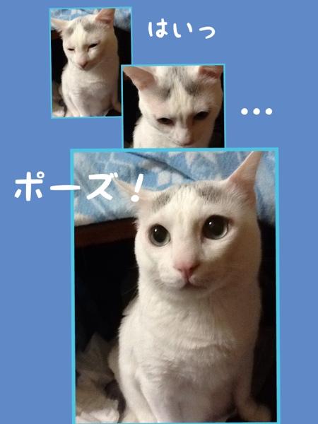 fc2blog_20130117175934a59.jpg
