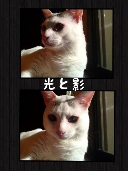 fc2blog_20130118170856a37.jpg