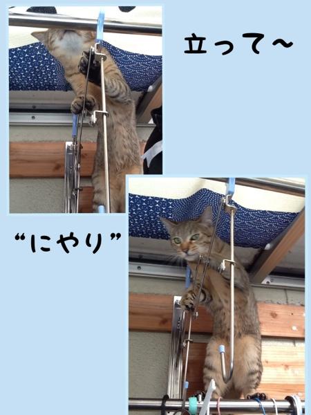 fc2blog_20130120124203570.jpg