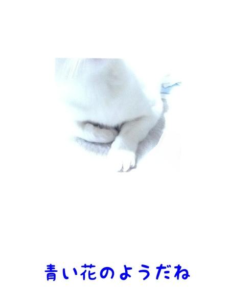 fc2blog_2013012119094656b.jpg