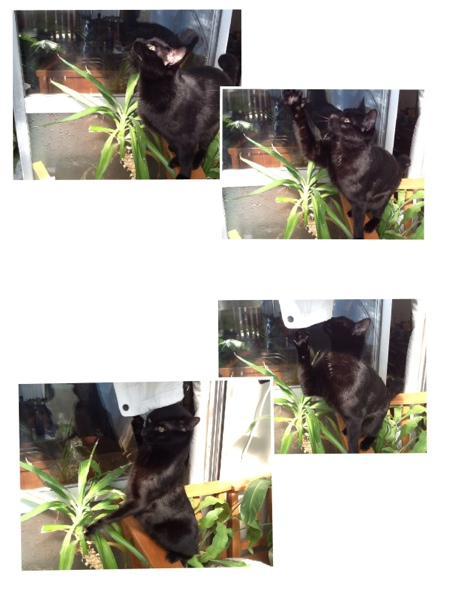 fc2blog_201302031640528e8.jpg