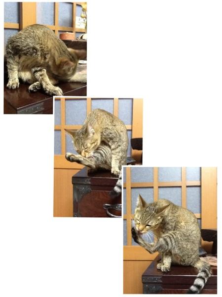 fc2blog_20130217173740ae4.jpg