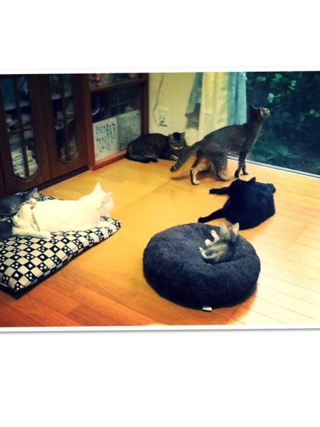 fc2blog_20130728181146fe7.jpg
