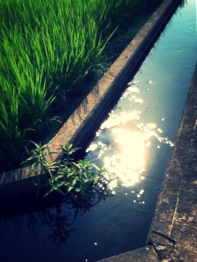 fc2blog_20130811203618463.jpg