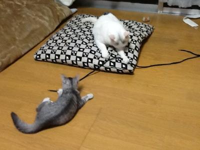 fc2blog_201308301922518a9.jpg