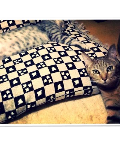 fc2blog_20131125181609da8.jpg