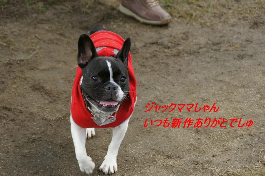 10_20111124100747.jpg
