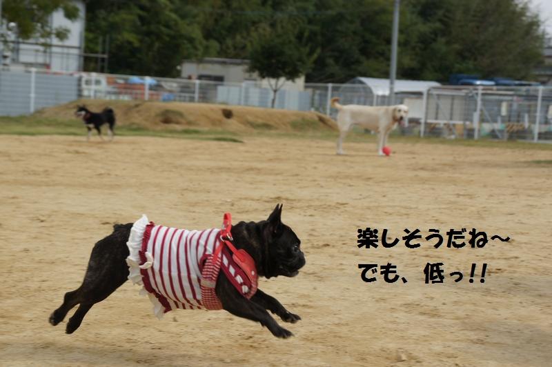 10_20131103225156311.jpg