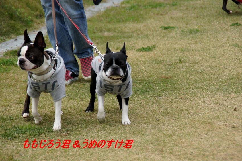 13_20111124101930.jpg