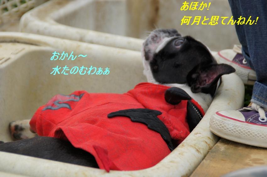14_20111102083108.jpg