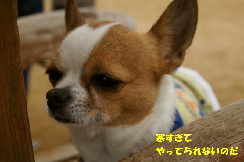 14_20130218164409.jpg