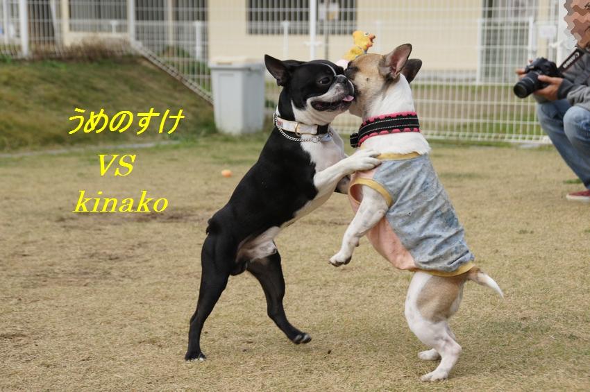 16_20111124102531.jpg