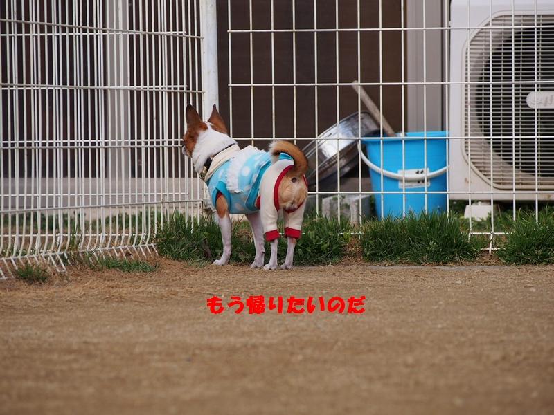 3_20130124112209.jpg