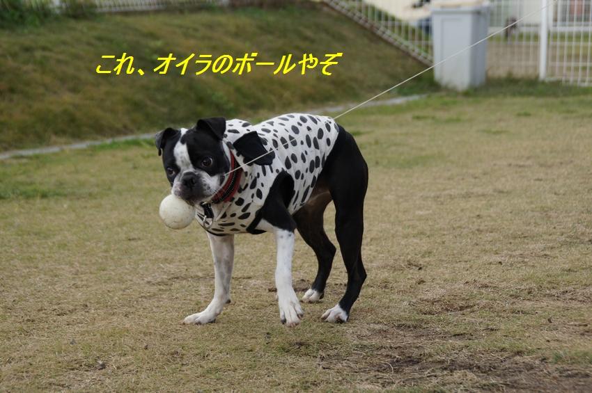 5_20111124100655.jpg