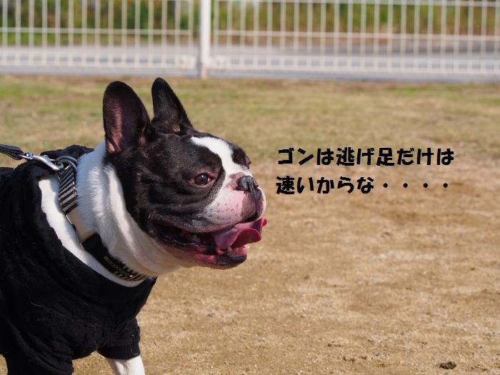 5_201311201849084ac.jpg