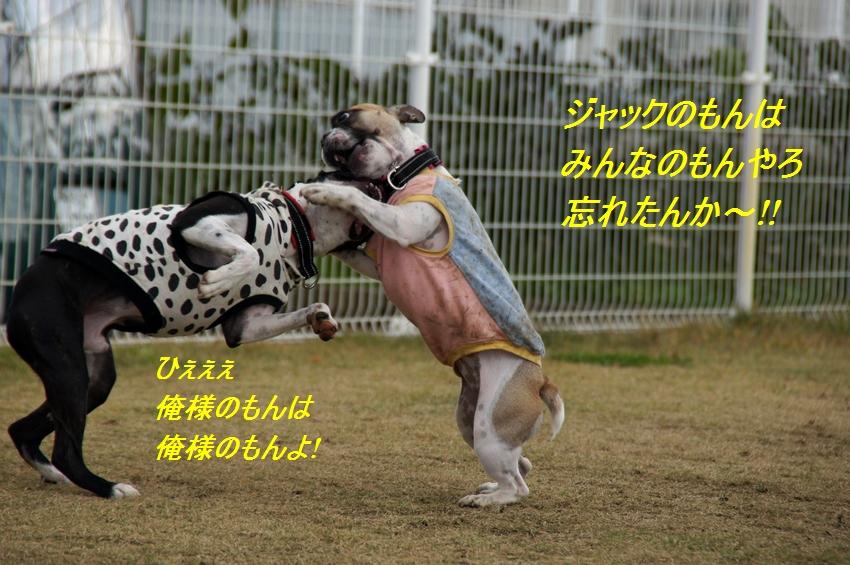 6_20111124100754.jpg