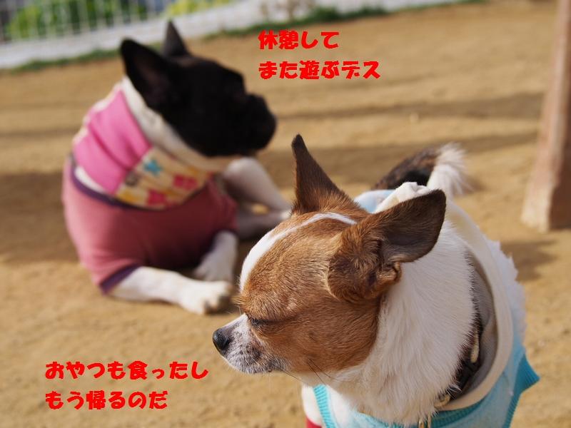 9_20130124113337.jpg