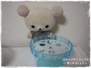 ちこちゃんのアボカド栽培日記R★5★こんなの発見-3