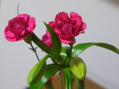 クリザール使用生け花
