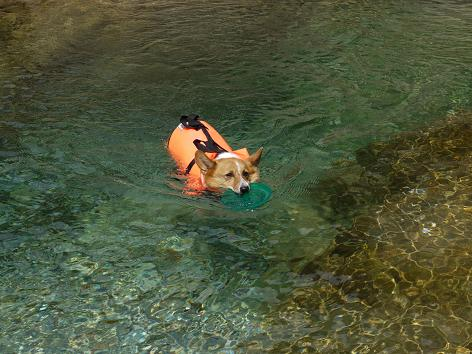 泳ぎ続ける8.22