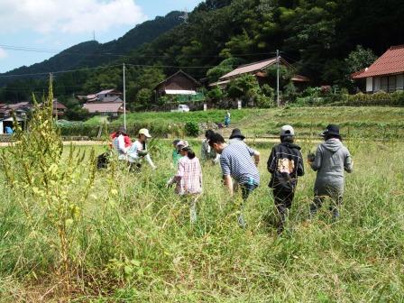 カボチャの収穫-01