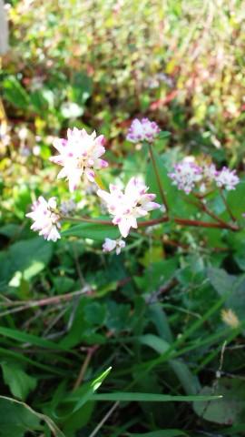 池水辺の花
