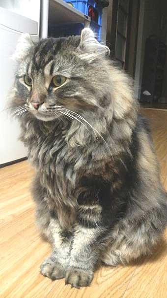 katen.jpg