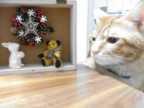 標本箱と猫