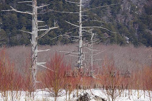 枯れ木に赤目