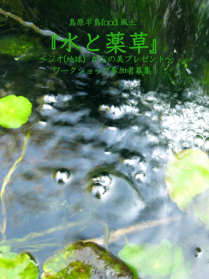 IMG_1943水と薬草ブログ