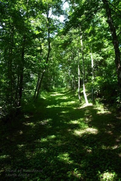Forest_100724.jpg