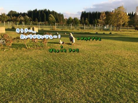 20141010225204.jpg