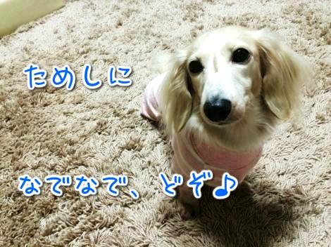 20141027225109.jpg