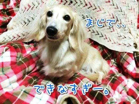 20141107225350.jpg