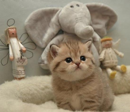 Kitten42.jpg