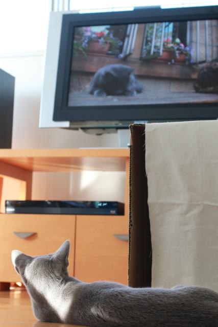 エマテレビ観る