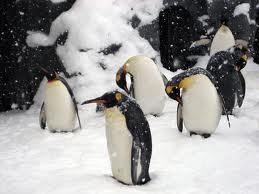 ペンギンのような青葉FC選手達