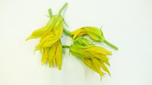 花 ズッキーニ
